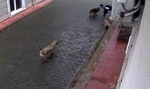 Bursa'da başıboş köpekler 12 yaşındaki çocuğa saldırdı