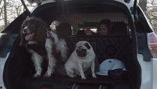 Köpeğin için 'Nissan X-Trail' ister misin çocuk adam