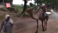 Koronavirüse karşı deveyle ilaçlama