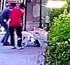 İstanbul'da pitbull cinsi köpek bir kediyi parçaladı