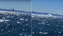 Meksika'da helikopter denize çakıldı