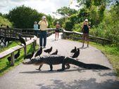 Miami'nin timsah parkı