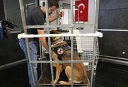 Narkotik köpeklerinin şark görevi