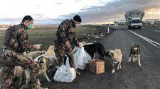 Kars'ta polisler yiyeceklerini sokak köpekleri ile paylaştı