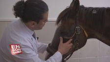 Hasta ve yaralı atları yaşama döndüren merkez