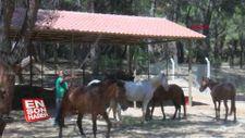 Faytonlardan kurtarılan atlara özel bakım