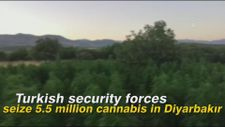 Turkish security forces seize 5.5 million cannabis in Diyarbakır
