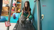 Ankara'da pilatesle zayıflayan obez kedi
