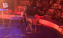 Rusya'da sirk kaplanı felç geçirdi
