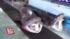 Balıkçıların ağına 2 köpek balığı takıldı