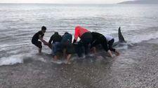 Antalya'da sahile vuran balina kurtarıldı