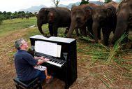 Tayland'da yaşayan bir adam 10 yıldır fillere çalıyor