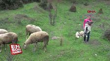 Melike, çobanlık yaparken ders çalışıyor