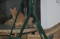 Ordu'daki sokak kedisi terör estiriyor