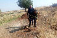 Mardin'de 5 yavru köpeği lağım çukuruna attılar