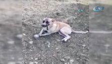 Köpeğin ağzını ve ayaklarını bağlayıp terk ettiler
