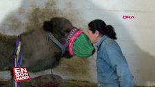 Çanakkale'de deve güreştiren kadınlar