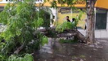 Rüzgardan kırılan ağaç dalı, yürüyenlerin üzerine düştü