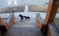 Chicago'da okula giden çocuklara saldıran sokak köpeği