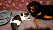 Denizli'de kedi ile köpeğin dostluğu