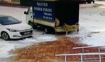 Sivas'ta kamyonetten ekmek alan sevimli köpek