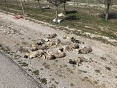 Konya'da yol kenarına atılan 13 ölü köpek yavrusu bulundu