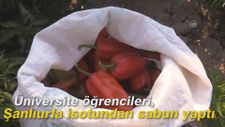 Üniversite öğrencileri, Şanlıurfa isotundan sabun yaptı