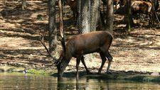 Ormanya hayvan popülasyonuna katkı sağlayacak