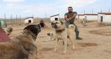 Kangal köpekler şimdi de sınırları koruyacak