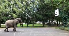 Üçlük ustası fil