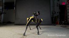 Robot köpeği bu kez dans yeteneğini sergiledi