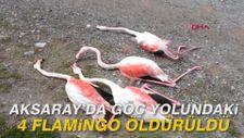 Aksaray'da göç yolundaki 4 flamingo öldürüldü