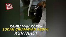 Kahraman köpek, sudan çıkamayan kediyi kurtardı