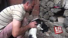 Köpeği dereye atan işçiye köpeklere bakma görevi