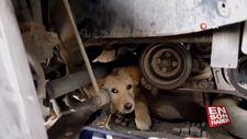Aracın motor kısmında sıkışan yaramaz köpek