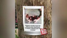 Kaybolan kedinin sahibine kavuşma anı