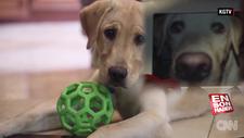 Amerikalı çift ölen köpeklerini klonlattı