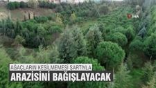 Ağaçların kesilmemesi şartıyla arazisini bağışlayacak
