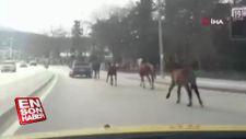Otomobile bağlanan atlar asfaltta metrelerce koşturuldu