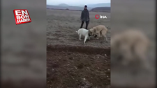 Köpekleri acımasızca dövüştürdüler