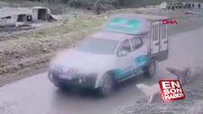 Belediye aracıyla köpeği ezdi