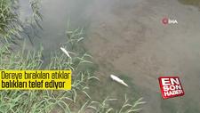 Dereye bırakılan atıklar balıkları telef ediyor