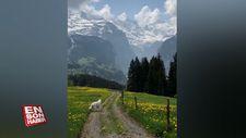 İsviçre Alpleri'nin muhteşem manzarası