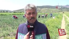 Hataylı çiftçilerin isyanı: Soğan tarlada 1 buçuk lira
