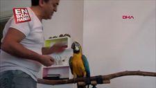 Turgut Özal'ın papağanı Cabbar'a eş aranıyor