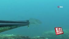 Dev balığın zıpkınla avlanma anı