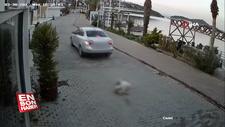 Bodrum'da köpeği ezen sürücü kaçtı
