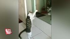 Yansımasını görünce Rocky Balboa'ya dönüşen kedi