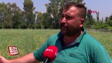 Çiftçinin isyanı: Bu yıl da evde kaldım