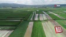 Sakarya'da 20 bin dekar tarım alanı sular altında kaldı